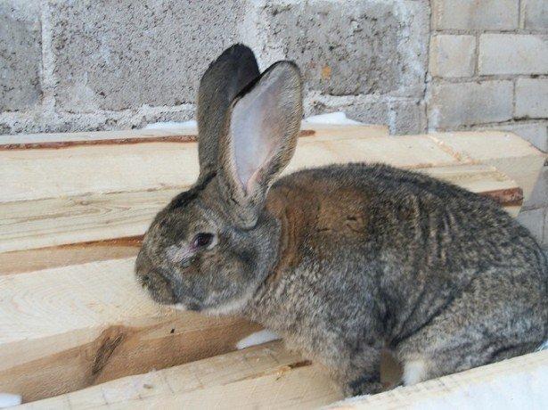 Фотография кролика