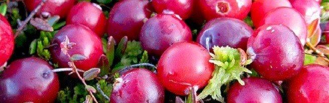 Cбор клюквы – каждую ягодку в кузовок