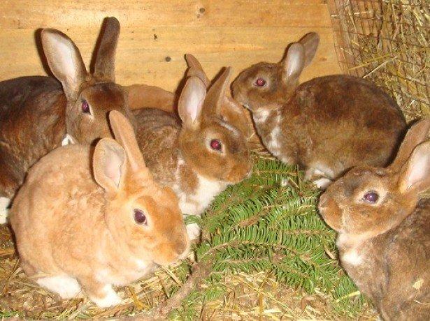 Кормление кроликов в домашнем хозяйстве