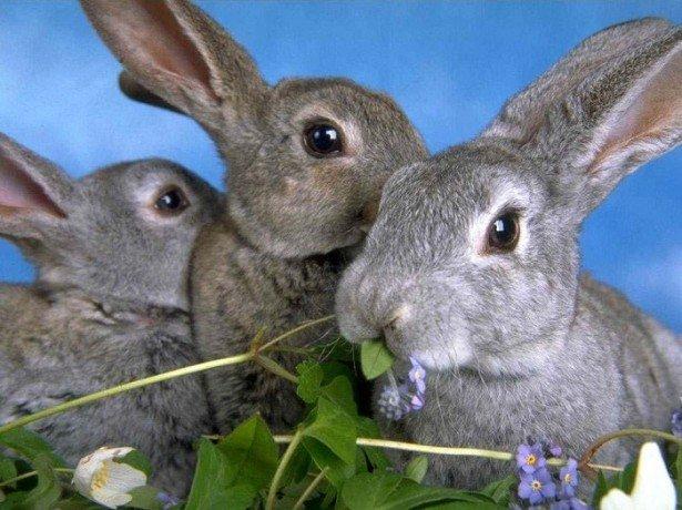 Витаминные добавки в рационе кроликов