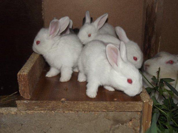 Роды крольчихи фото