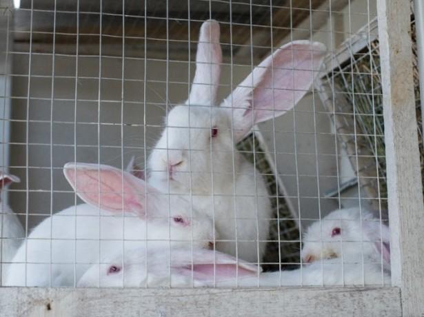 Способы содержания кроликов фото