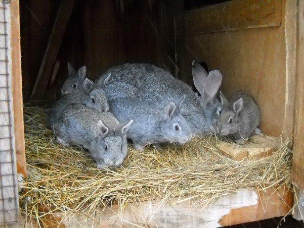 Бизнес-план по разведению кроликов