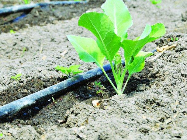 Правила посева на рассаду
