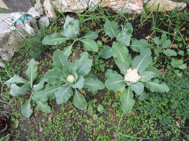 Способы и схема высева семян