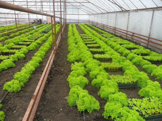 Преимущества и сложности «зеленого» бизнеса