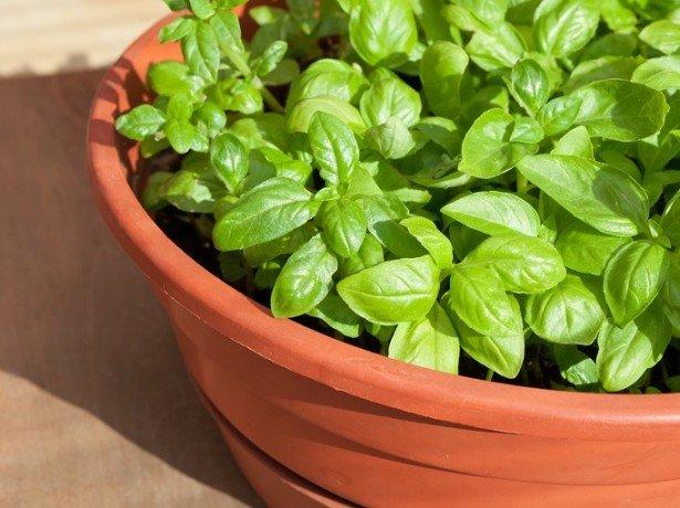 Посев семян и обеспечение оптимальных условий всходам