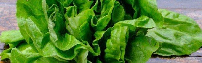 Крест салат полезные свойства
