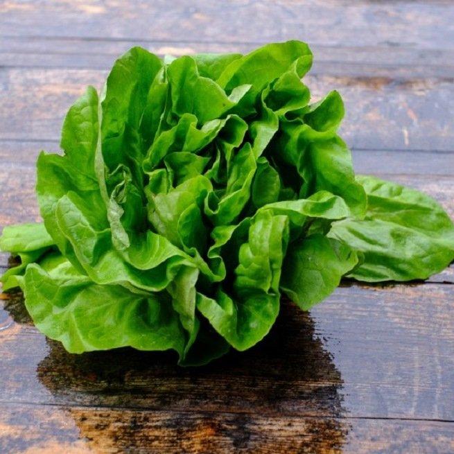 На фото салат латук