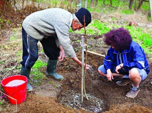 Подготовка персика к зиме в нашем климате