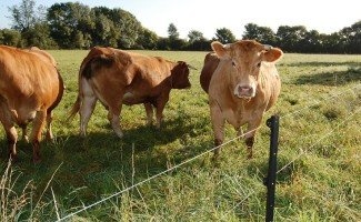 Электрический пастух для коров – модели и их преимущества