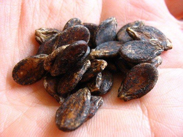 Польза арбузных семечек и кожуры