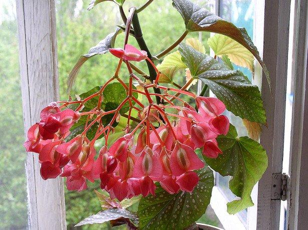 Декоративно-лиственная и цветущая