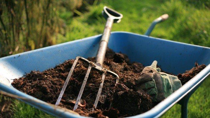 Подготовка почвы и уход за рассадой