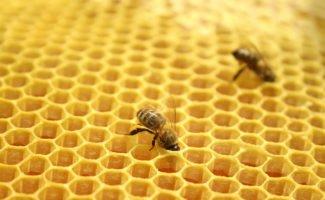 Двухматочное пчеловодство в лежаках - ощутимая добавка к сбору