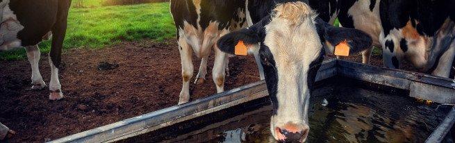 Поилки для коров своими руками