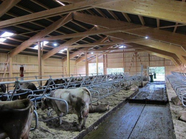 Как сделать кормушки для коров