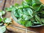 Виды шпината – описание и особенности
