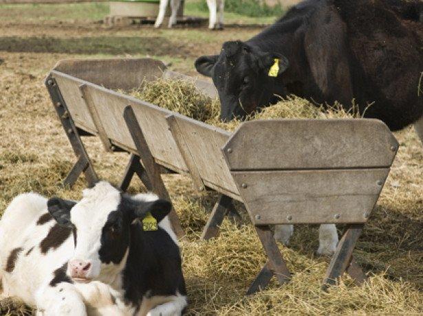 Кормушка для коровы своими руками фото