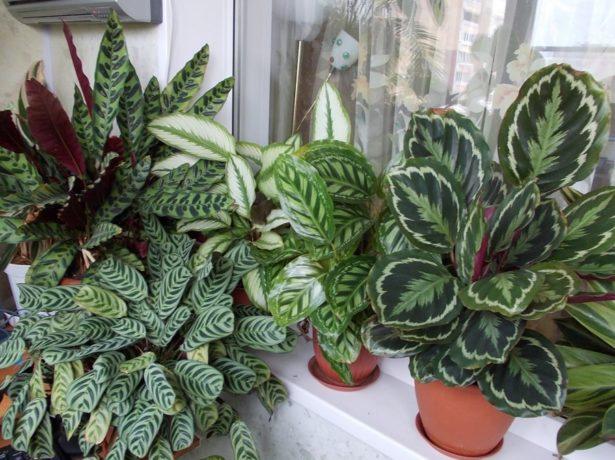 Уход за растением фото