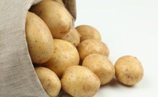 Картофель Гала – раннеспелый урожайный сорт для вашего огорода