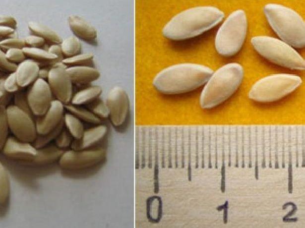 Китайское чудо — семена