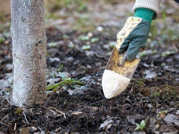 Подкормка дерева