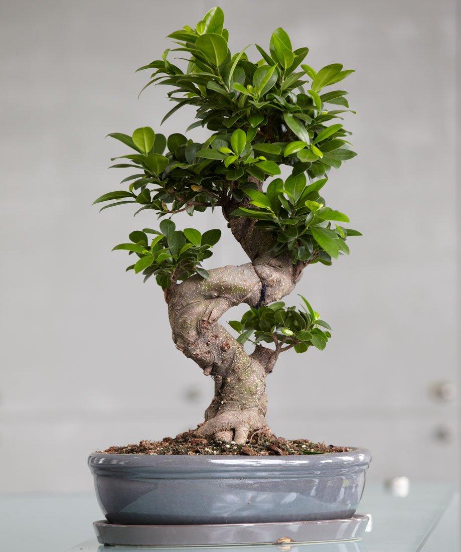 многие разновидности домашних деревьев фото покупка совершается