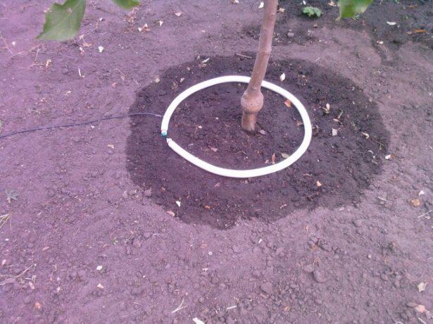 Капельная система полива дерева