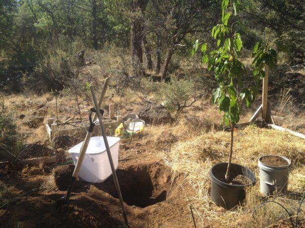 Яма для посадки черешни в саду