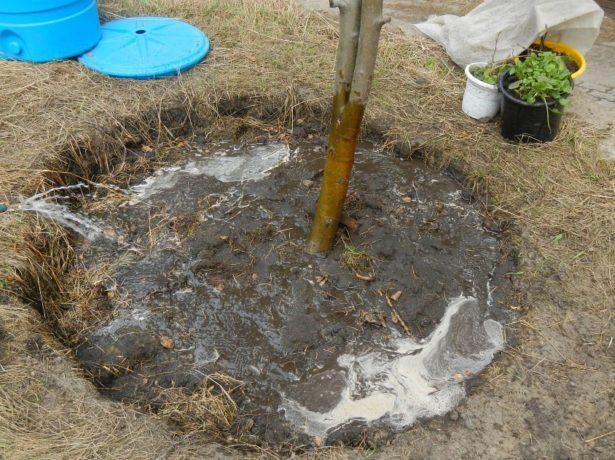 Полив дерева в приствольный круг