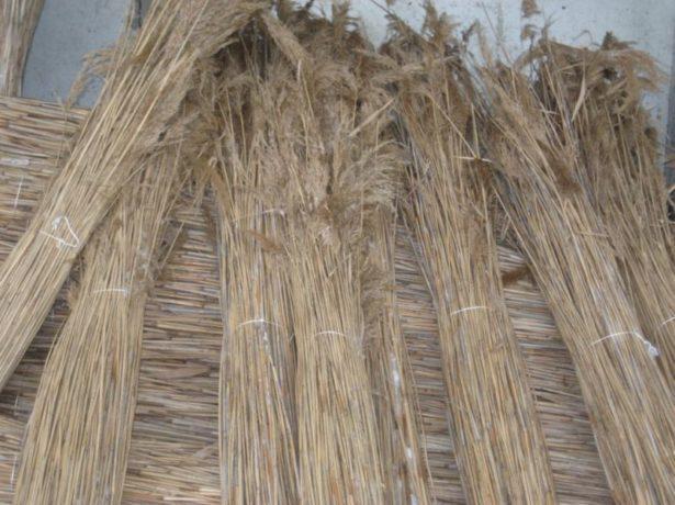 Камыш для плетения
