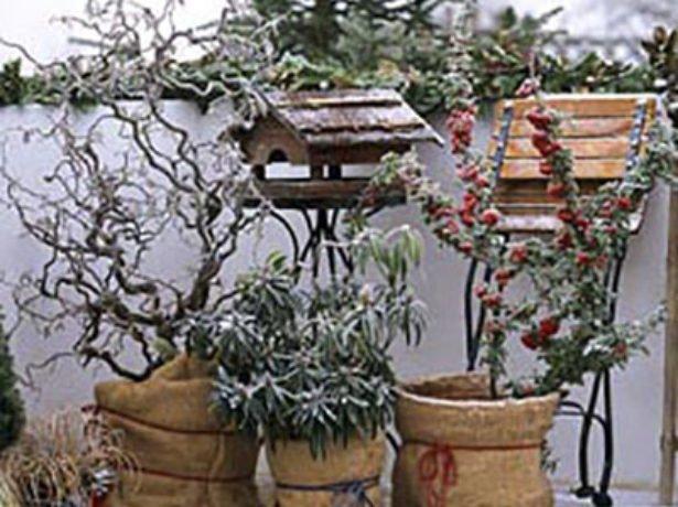 Бересклет и другие растения