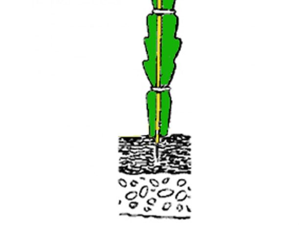 Как закрепить черенок лесного кактуса