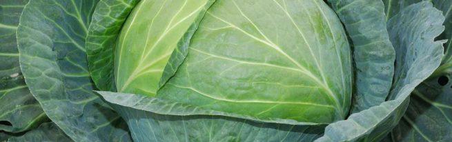 Сорт капусты Валентина: вкусовые характеристики и нюансы выращивания