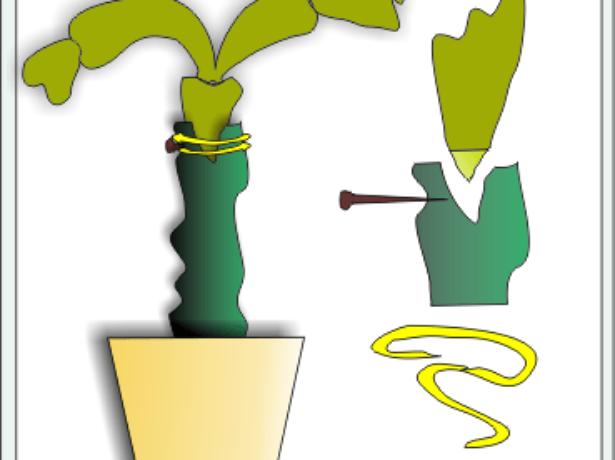 Прививка лесного кактуса клином