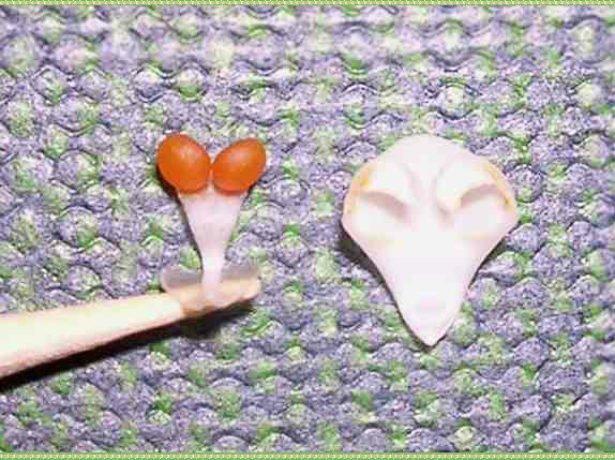 Пыльник цветка орхидеи и чешуйка