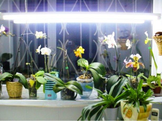 Лампа над орхидеями