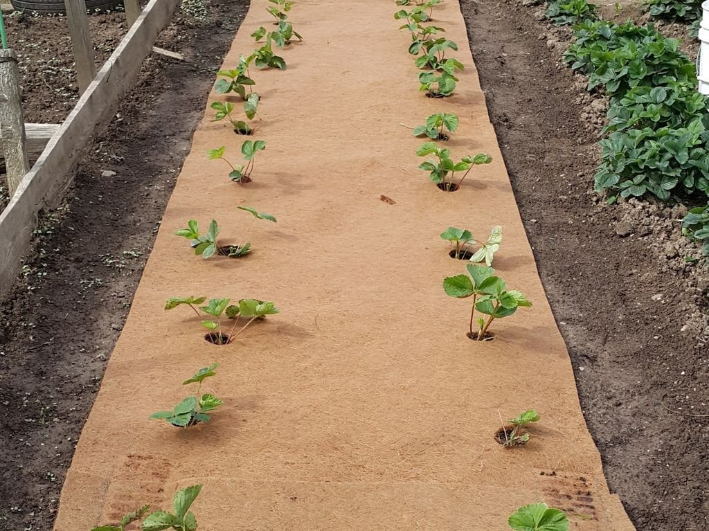 Маты для выращивания клубники 70