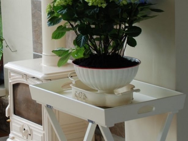 Гортензия комнатная уход в домашних условиях