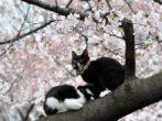 Вишня сорта Чудо - как вырастить идеальное дерево