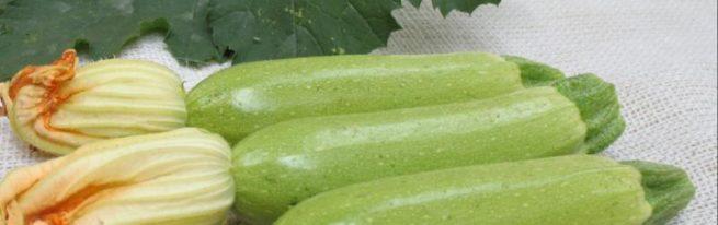Кабачок Кавили – ранний и суперурожайный
