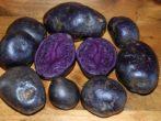 Картофель Purple Majesty