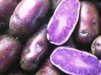 Картофель Purple Peruvian