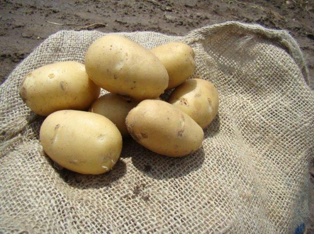 Картофель Витара