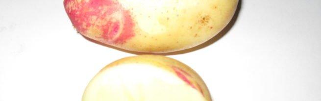 Сорт картофеля Лимонка: описание и нюансы посадки