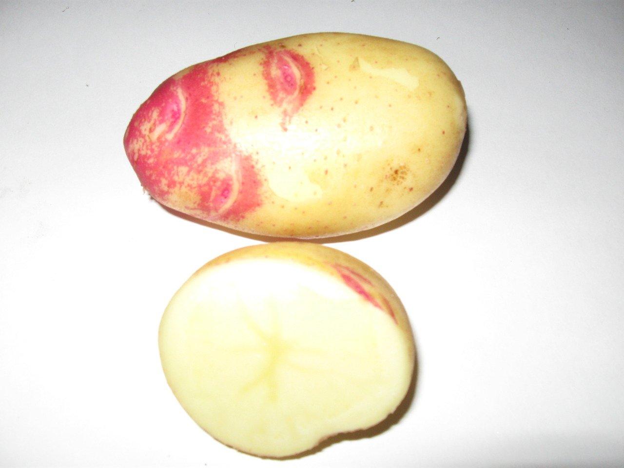 заметила картошка сорт лимонка описание с фото американском