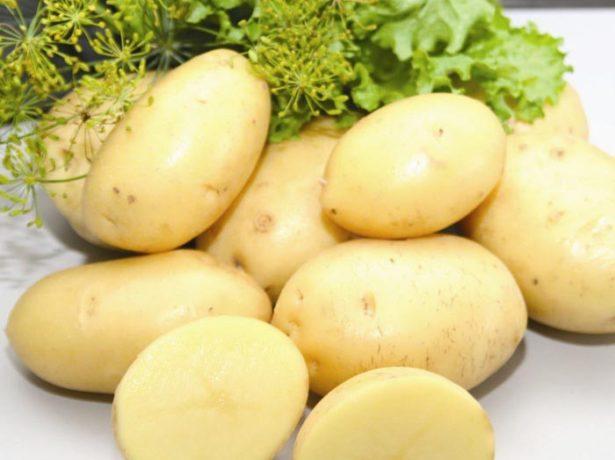 Клубни картофеля Импала
