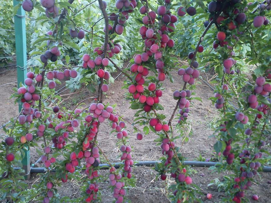 Фото сбора урожая осенью