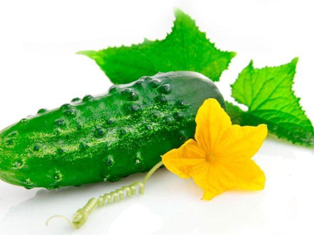 Плод здорового огурца